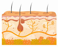 illustration of hair on skin